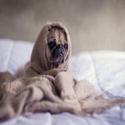 Brit Care Adult small Breed Bárány-rizs 7,5kg