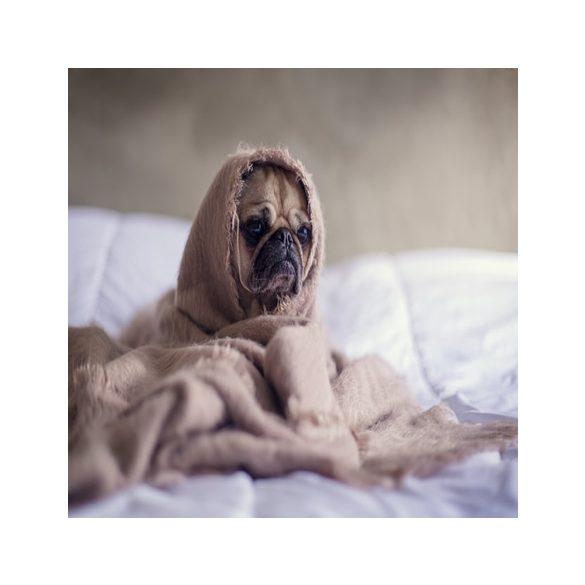 Beaphar FIPROtec bolhacsepp macskáknak